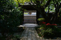 京の彼岸花雨宝院 - Deep Season