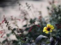Autumn Garden - MPG