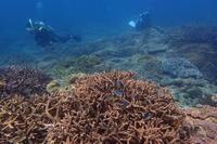 19.10.6 息抜きに、ノープランで - 沖縄本島 島んちゅガイドの『ダイビング日誌』