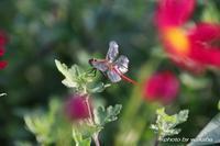 市民農園で見かけた花と昆虫(^^♪ - 自然のキャンバス