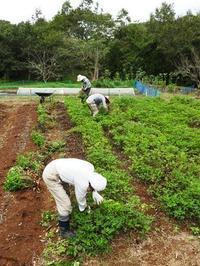 落花生の栽培体験をしよう(収穫) - 千葉県いすみ環境と文化のさとセンター