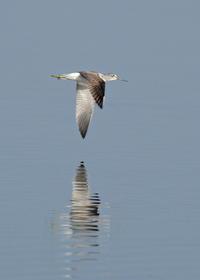 オグロシギⅡ - 野鳥との出会い