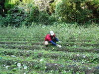 無農薬・無化学肥料で育てる「菊池水源産エゴマ」令和元年度の『白エゴマ』を収穫しました! - FLCパートナーズストア