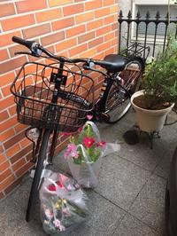 新車と草花と種とダージ - ミニチュアブルテリア ダージと一緒3