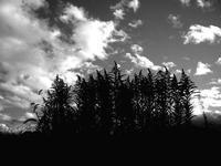 雑草の森 - memephoto blog
