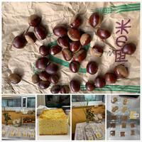 大きな栗の下・松川産もちきび・開店準備・営業のお知らせ・収穫祭 - きいろいポケット