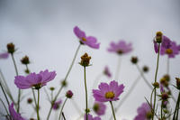 花マクロ - Bronz Photo