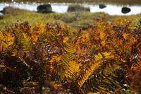 八島湿原②光る草 - 風の彩り-2