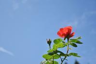 続・秋の湧永庭園 - できる限り心をこめて・・Ⅳ