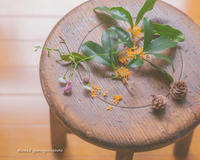 可愛い椅子と秋。 - Yuruyuru Photograph