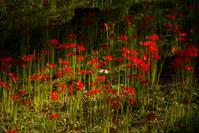 紅と翠 - ノッツォのホデナス