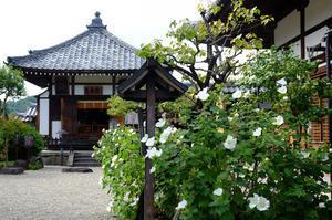 明日香の彼岸花(3)2019-09-30 -
