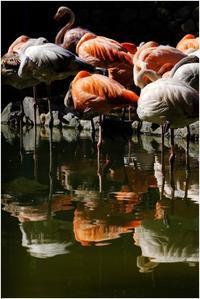 フラミンゴ池 - HIGEMASA's Moody Photo