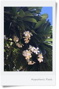 初ハワイに行ってきました♪ - **いろいろ日記**