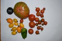 自然栽培昨日は防災訓練そろそろ仕舞い作業収穫 - 自然栽培 釧路日記