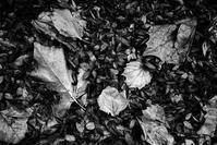 朝の散歩で一歩進んだ秋を見つける。 - Yoshi-A の写真の楽しみ