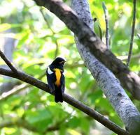 カイノキのところで・・・ - 一期一会の野鳥たち