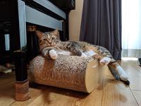 猫用品はAmazon定期便 - 一歩前進したかも日記