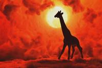 サバンナのキリンと夕陽 -   木村 弘好の「こんな感じかな~」□□□ □□□□ □□ □ブログ□□□