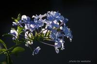 街角の花壇に咲いていた花々(*^-^*) - 自然のキャンバス