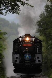 葉っぱのトンネル - 蒸気屋が贈る日々の写真-exciteVer