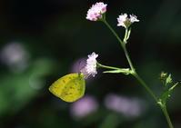 金平糖の花に・・・ - 自然がいっぱい4は終了しました。