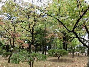 初々しい秋色 -