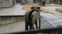 こんにちはーってよっ... - ゾウは勘定にいれません2  to say no thing of the elephant