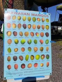 先日植えたマンゴーの種類 - Nature Care