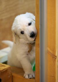 Puppy - Patrappi annex