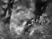 野川と花と。 - りとるなっぷ*うたたね日記*