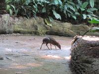 動物園が好き ♪  森の妖精マメジカさん - よく飲むオバチャン☆本日のメニュー