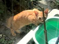 木登り好きの子猫の茶トラちゃんが水を飲みに来てた - Lucky★Dip666-Ⅳ