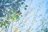 心に花を*フォトプロジェクト。 - Yuruyuru Photograph