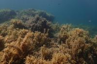 19.10.9オーダー!カクテル入りました。 - 沖縄本島 島んちゅガイドの『ダイビング日誌』
