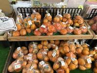 大洗まいわい市場 八郷の柿入荷! - わいわいまいわい-大洗まいわい市場公式ブログ