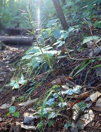 10月5日の三瓶山① - 清治の花便り