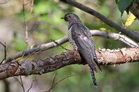 秋のトケン@北海道。 - 季節の野鳥~Wildbirds archives