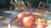 木登りトマトとミニダリア - 歩いても歩いても、な日々
