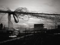 やさしい雨 - memephoto blog