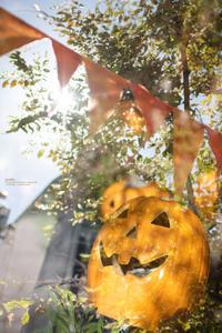 Autumn color - purebliss