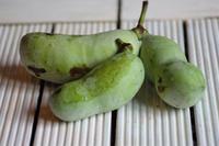 ポポっていう果物 - カンパーニュママの暮らしの雑貨とポメプーころすけと日々の出来事日記