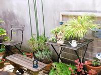 庭の整理 - blancheの日記