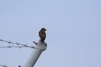 鷹の渡8 - 平さん