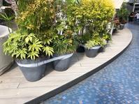 これは何かと言うと、台風襲来に備えて、植木鉢を結んでるところです。 - 設計事務所 arkilab