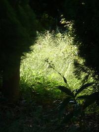 明るいニュース - hibariの巣