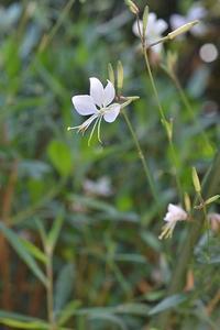 名残りの花たち - refresh-3