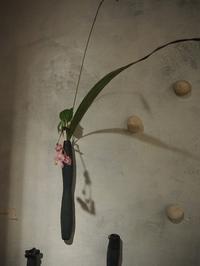 花とうつわ展2 - うつわshizenブログ