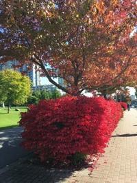 秋の紅葉ジョギング - Prairie Life