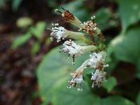 10月5日の三瓶山② - 清治の花便り